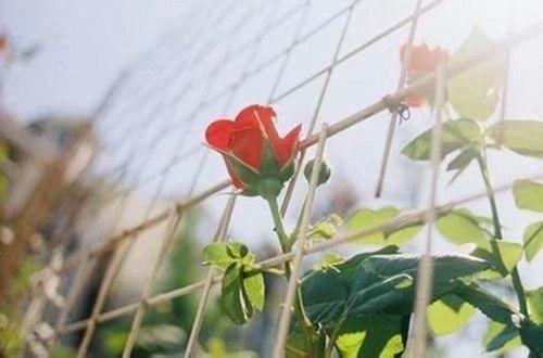 """爱不需要说太多的说说:天长地久的爱情,不需要太多的""""我爱你""""和""""永远在一起"""""""