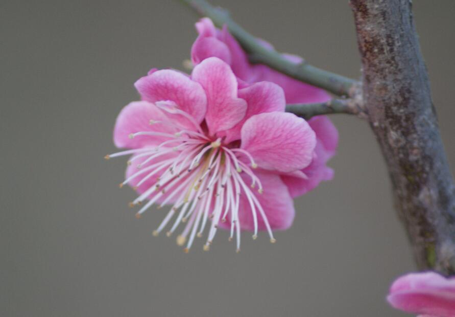 描写樱花的句子,樱花的句子 唯美心情说说