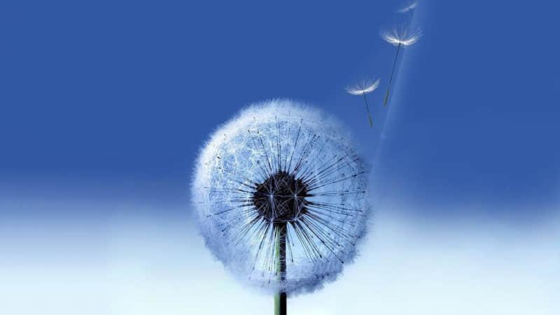 关于星星月亮的句子 唯美温柔晚安心语