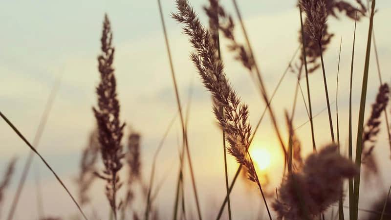 春暖花开的心情说说 春暖花开的朋友圈句子